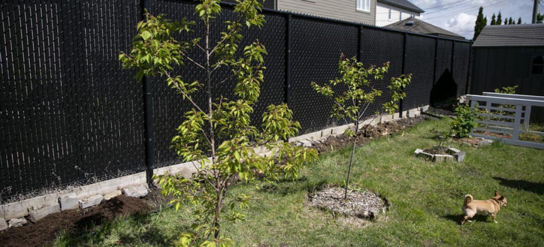 Des arbres à bas prix pour verdir Montréal