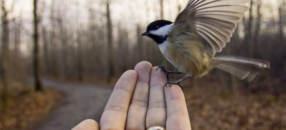 Inviter les oiseaux chez soi